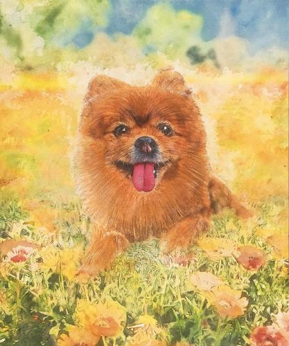 Artwork Pomeranian