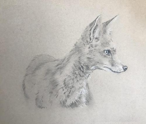 Artwork Fox cub
