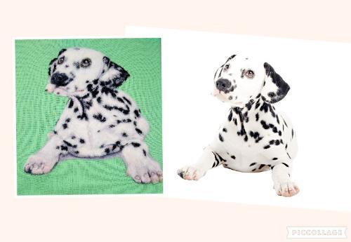 Artwork Dalmatian Puppy Needle felt portrait