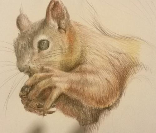 Artwork Squirrel SOLD