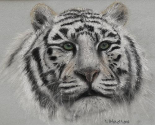Artwork Snow Tiger