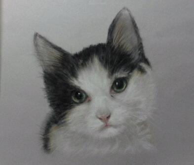 Artwork Kitten