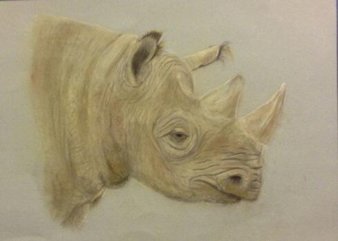 Artwork Rhino