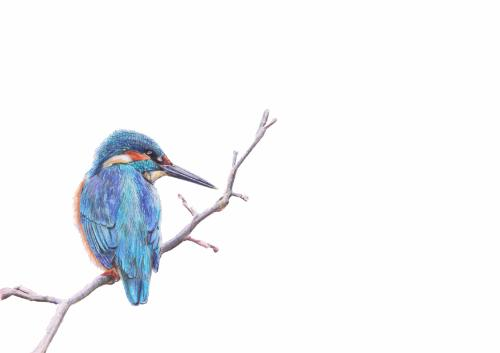 Artwork Kingfisher